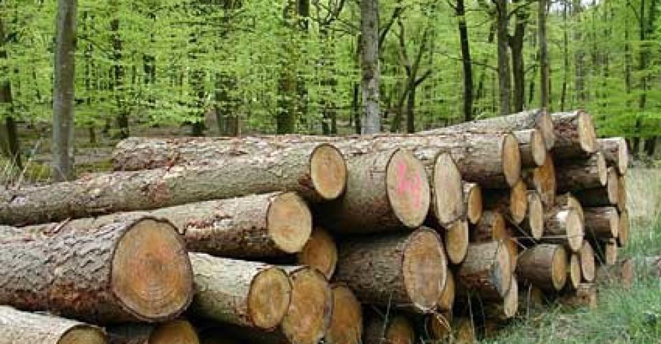 Bando PSR: investimenti per il settore forestale. Domande entro il 2 luglio