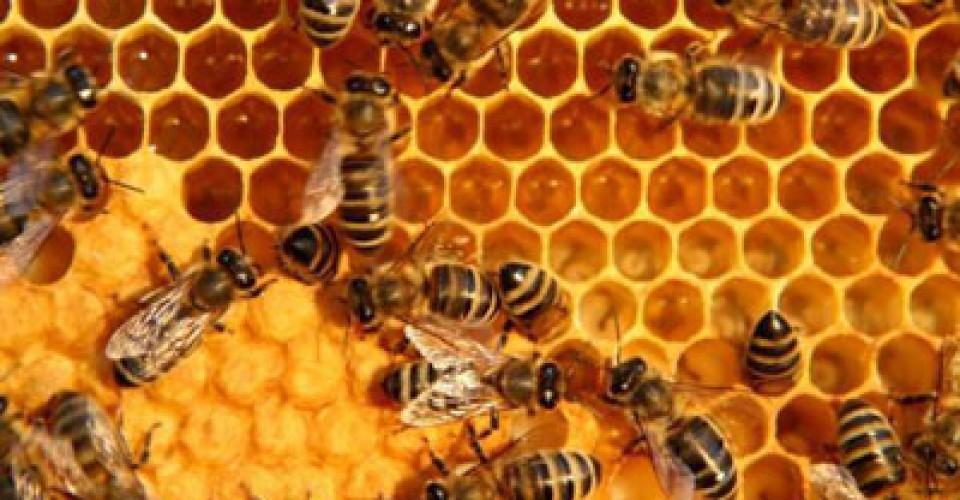 Bando apicoltura: avviso pubblico per la concessione di contributi anno 2021-2022