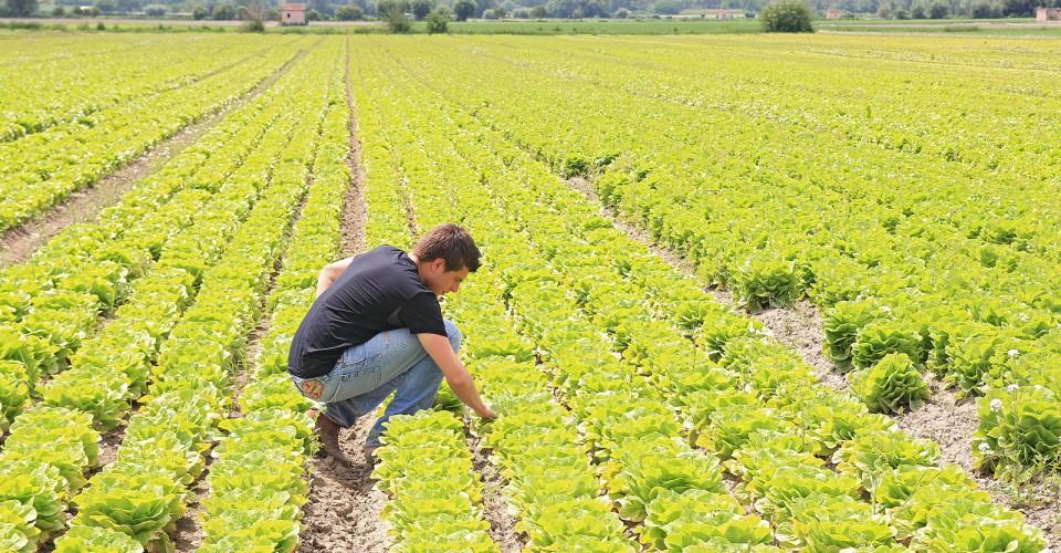 PSR: proroga al 31 agosto per le domande di contributo per i giovani agricoltori