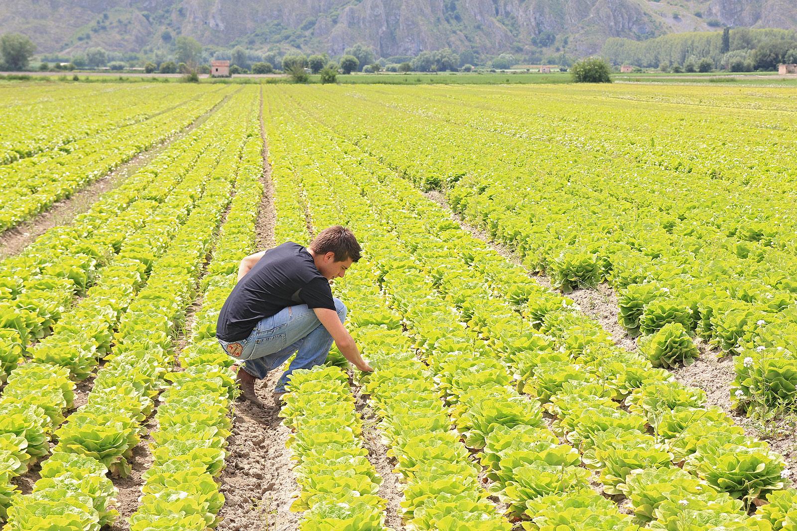 Agricoltore giovane