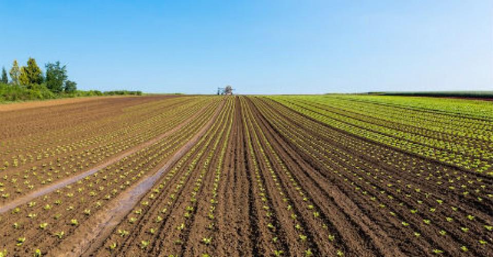 Psr, gestione deludente. Il Piemonte fatica a spendere i fondi europei per l'agricoltura