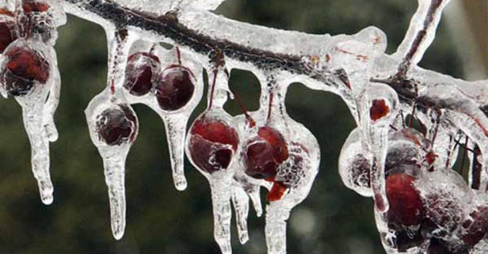 Danni da gelo: scarica il modello per la segnalazione ai Comuni
