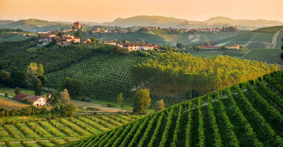 In calo le imprese agricole, in Piemonte la discesa è doppia rispetto alla media nazionale