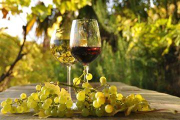 Bicchieri di vino in vigna