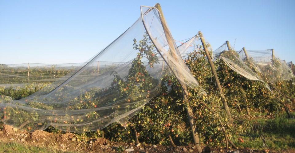 Assicurazioni: agricoltori e allevatori cuneesi non possono più aspettare