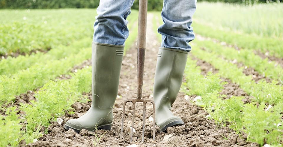 PSR – Insediamento giovani agricoltori, occorre un ulteriore sforzo della Regione