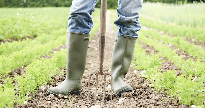 fine giornata lavorativa in agricoltura