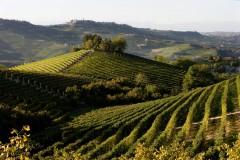 Colline, vigne, Barolo