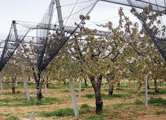 rete antigrandine frutteto