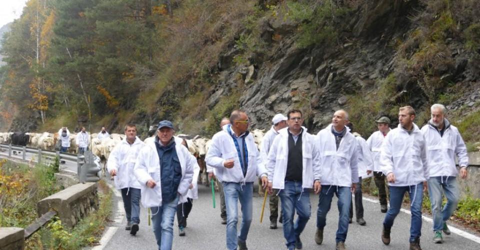 Caluma el vache: la montagna al centro dell'attenzione a Prazzo