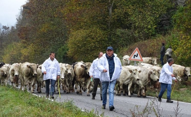 """Un'immagine della prima edizione dell'iniziativa """"Caluma el vache. Il ritorno della mandria a valle"""" organizzata da Confagricoltura lo scorso anno a Prazzo"""