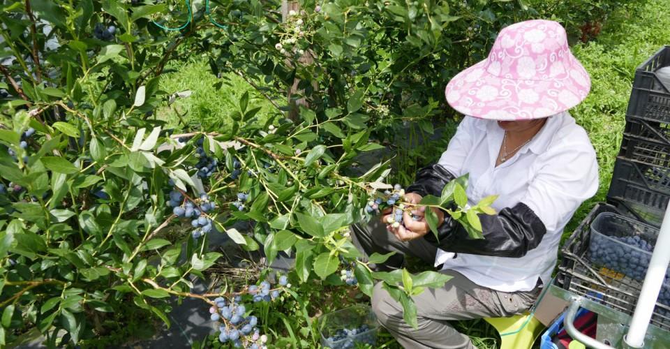 Serve manodopera nelle aziende agricole, diamo la possibilità di lavorare anche a chi percepisce il reddito di cittadinanza