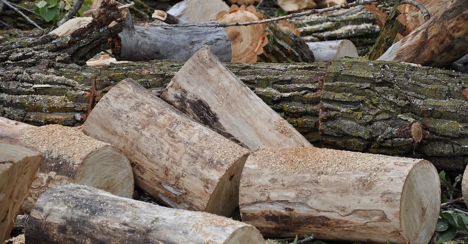 """Confagricoltura Cuneo: """"Serve una proroga al periodo di taglio nei boschi"""""""
