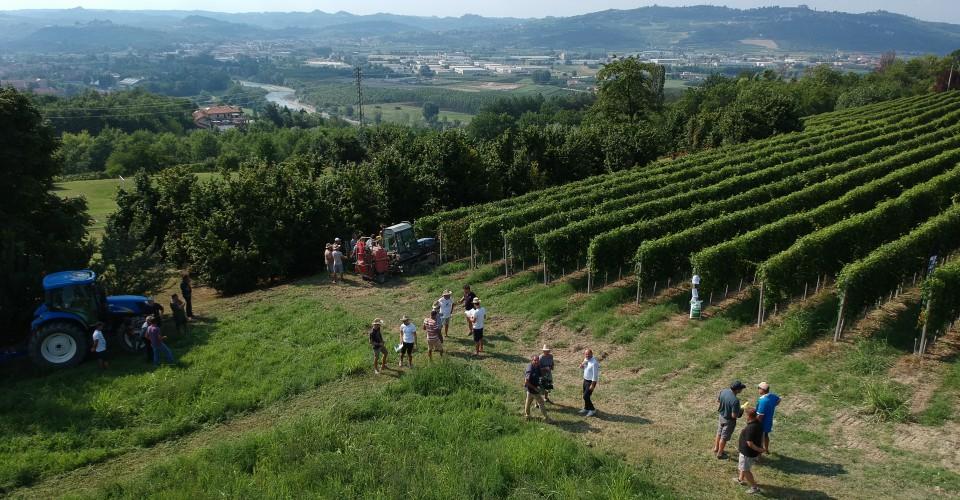 Le vigne aprono agli enoturisti della vendemmia