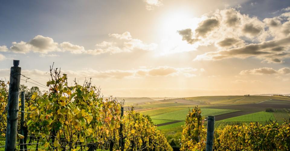 Conversione diritti di reimpianto viticoli originati da estirpo di vigneto entro il 31 dicembre 2020