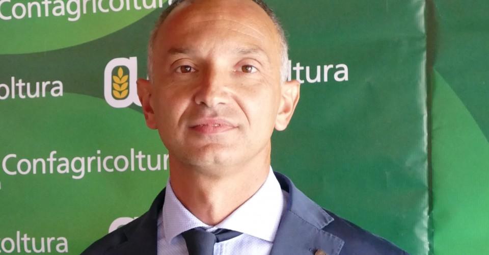 Enrico Allasia eletto presidente nazionale dei produttori di legno di Confagricoltura