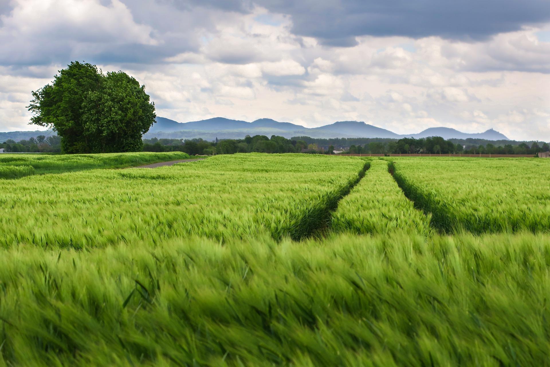 campo_terreno_agricoltura