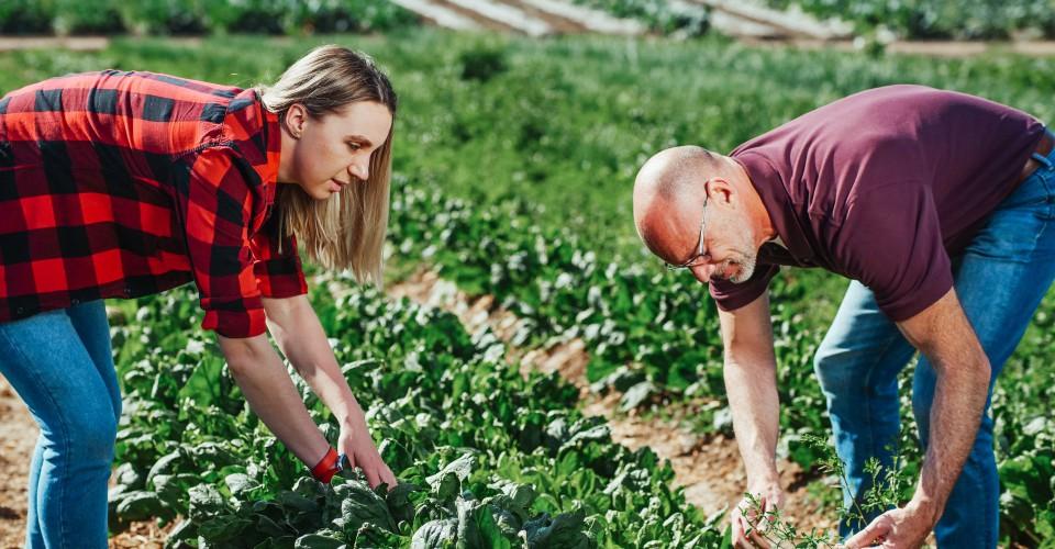 Indennità per i lavoratori del settore agricolo, presentare domanda entro il 30 giugno 2021