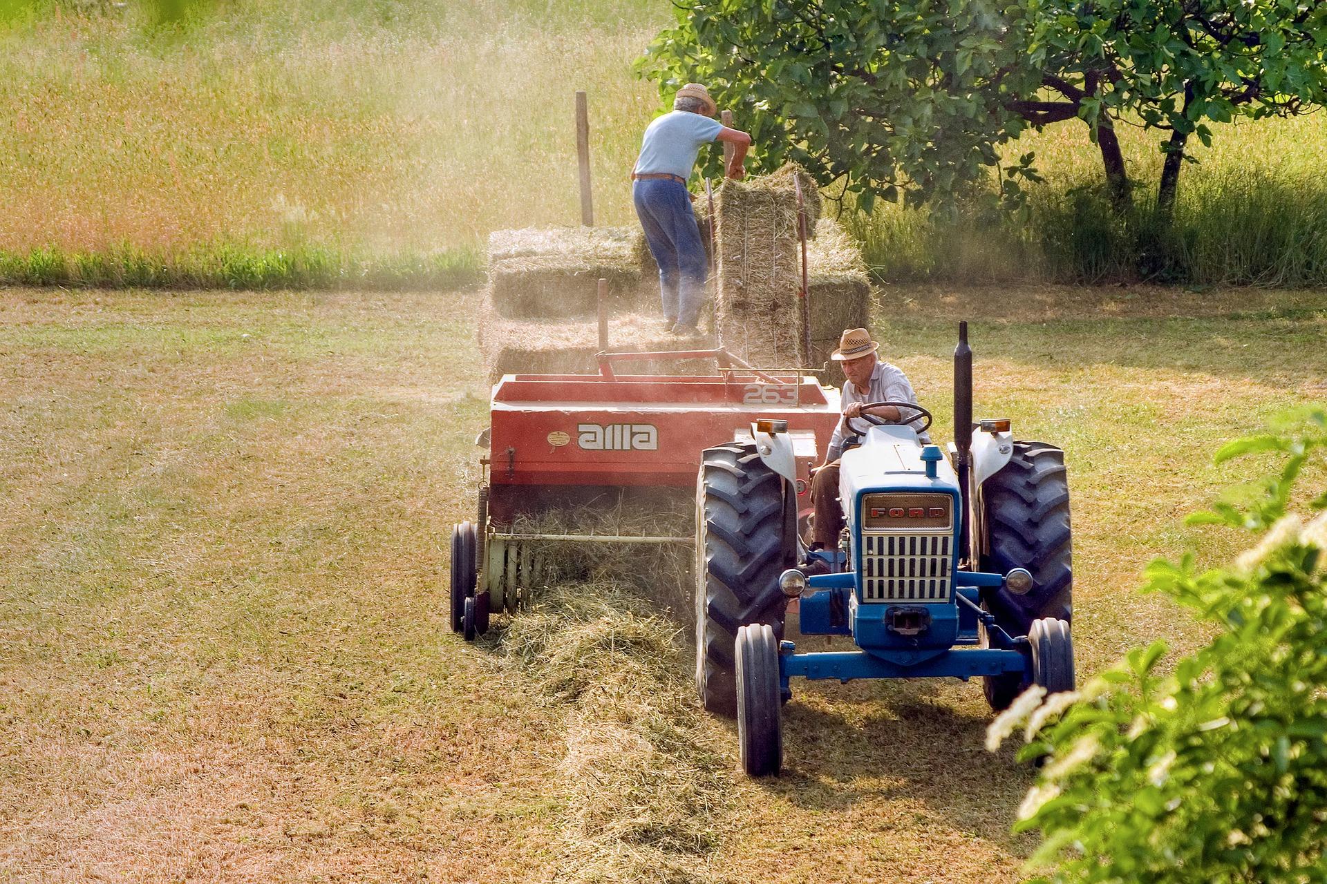 lavoro_lavoratore_agricoltura_coltivatore diretto